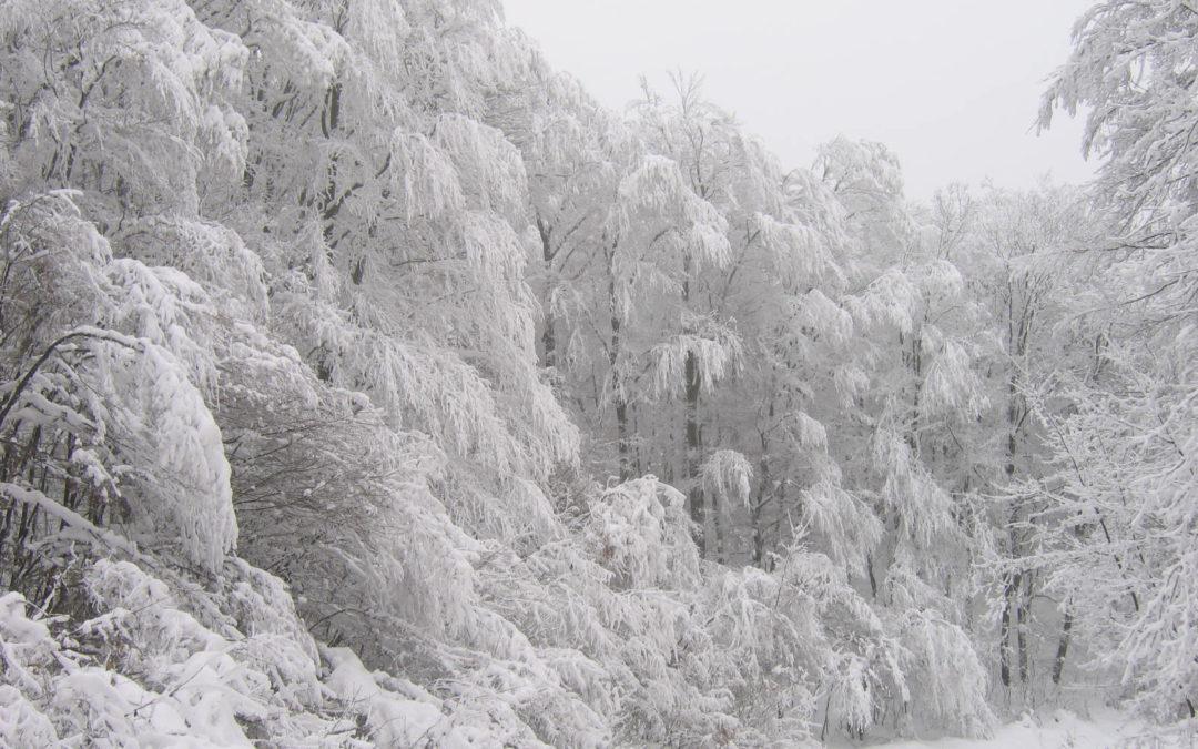 Polgármesteri közlemény a várható  havazással kapcsolatban