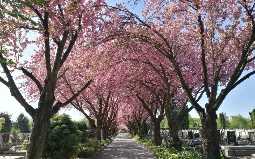 Sírkerti séták a Pécsi Köztemetőben