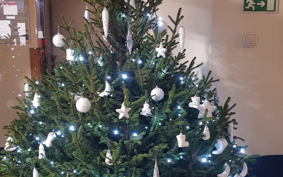 BIOKOM örökbe fogadja a földlabdás karácsonyfákat